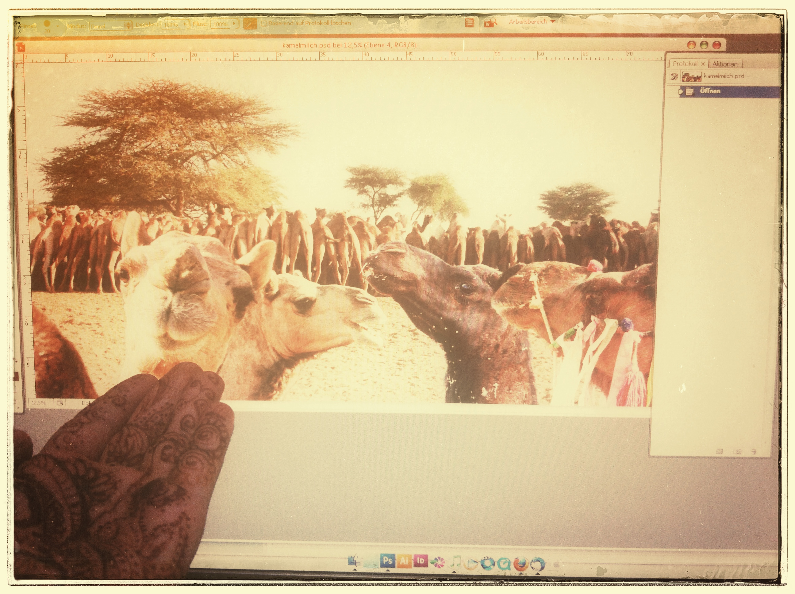 Kamele füttern & Bilder bearbeiten.