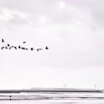 Vogelflug & Wattenmeer.