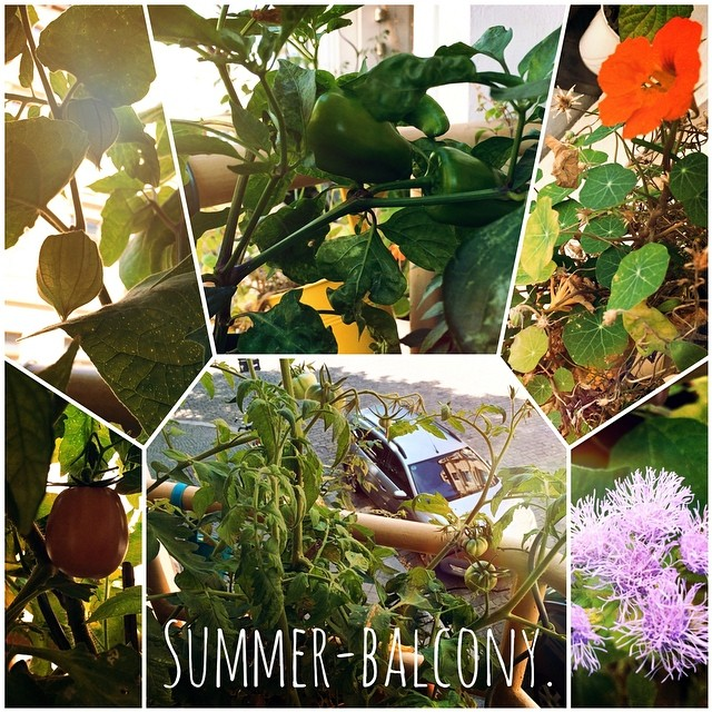 Summer-balcony.#summer #sun #balcony #balkon #grün #green #fresh  #tomate #tomato #pepper #paprika #beansupport #firebean #feuerbohne #physalis #flower #enjoy #love #life #like #vegan #vegetarian #fruit #iggood #igfood #instafood