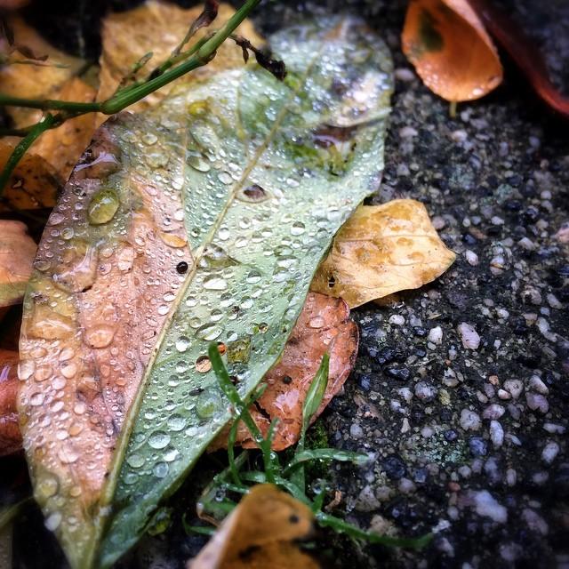 Farbenspiel mit Morgentau. | Colourful with morningdew. | Herbstverzaubert. Eingefangen mit instagram, direkt vor der Haustür.