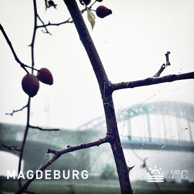 Hello foggy morning! I love this kind of weather. | Hallo schöner Nebelmorgen. Ich liebe diese Art Wetter.