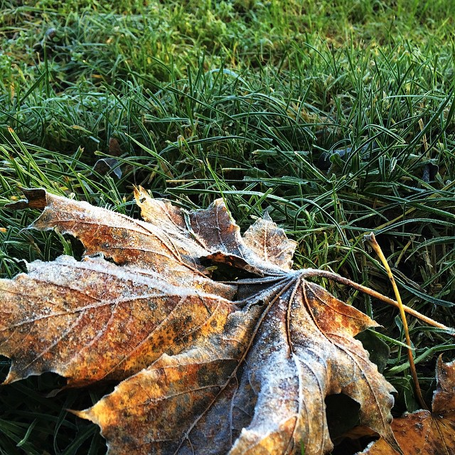 Es wird kalt. Am Morgen frostete die Feuchtigkeit. | It's getting cold outside. The gras was frosty
