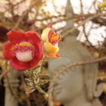 Kalendermotiv: Laos & Kambodscha 027