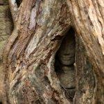 Kalendermotiv: Laos & Kambodscha 044