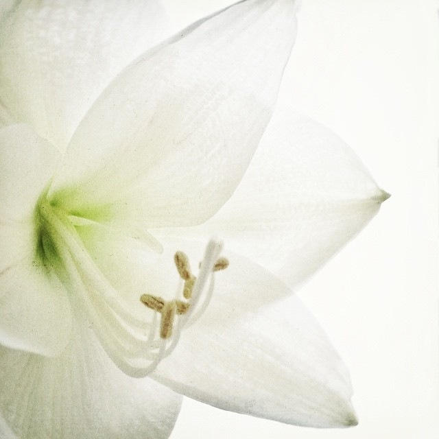 Sorgen sind wie Pflanzen. Je mehr du sie düngst, desto schneller wachsen sie. Für mehr Ruhe im Kopf.
