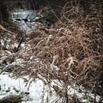 Ich schlag den Kragen hoch & stapfe durch die Winterwelt.