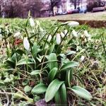 Jipppiii, langsam geht's bergauf! Der Frühling sitzt bereits in den Startlöchern! Jipppiii, the Spring is coming. I saw my first snowdrop.