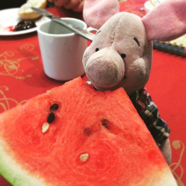 Noch ein wenig Melone. #yummi mit #Ferkel auf #Tour.#FSJmachtKultur2015