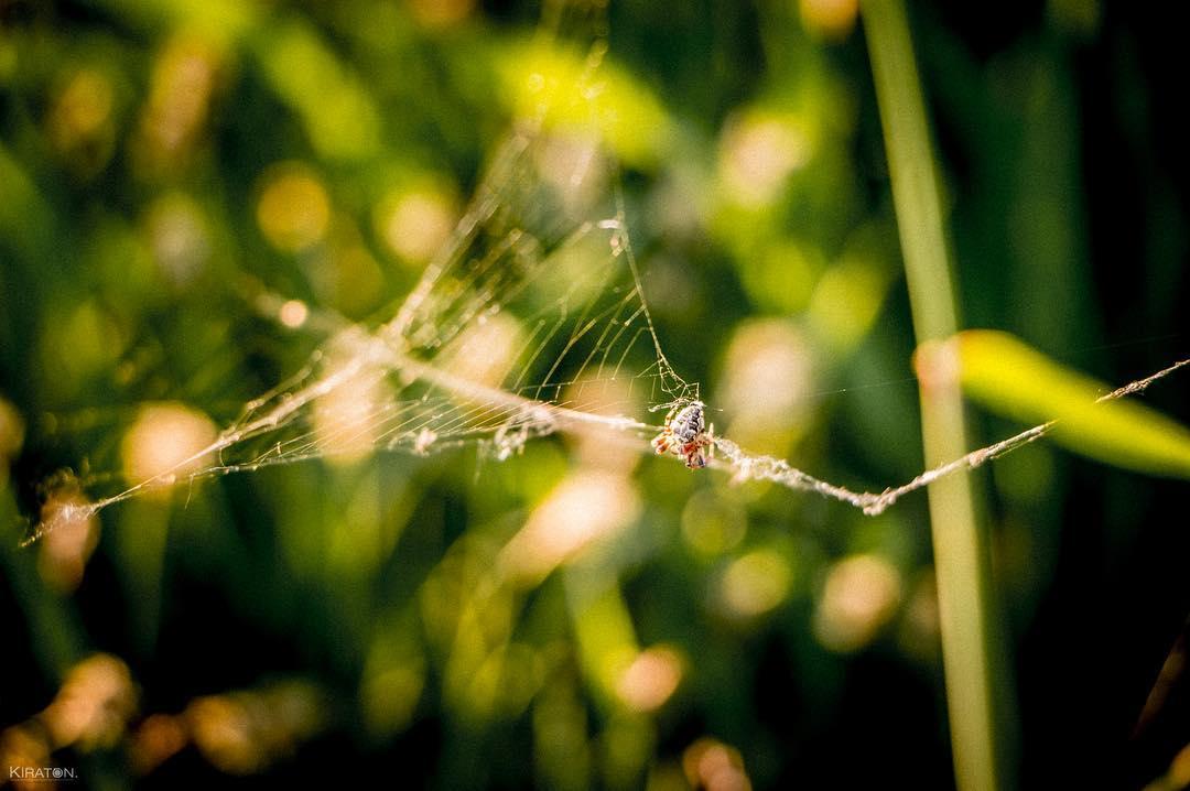 »Die Spinne scheint ein und Menschen überlegenes Wesen zu sein, da wir ihr so eine irrationale Angst entgegenbringen.« [Michael Josef Sommer]