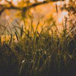 »Die Natur betrügt uns nie. Wir sind es immer, die wir uns selbst betrügen.« [Jean-Jacques Rousseau]