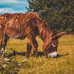 Das saftigste Grün. Das saftigste Grün gibt es mit Sicherheit im Tierpark Arche Warder ... Ich denke, unserem Paten-Poitou-Esel geht es dort blendend. Was meint ihr?