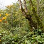 Grüner Elefant | Plitvicer Seen.