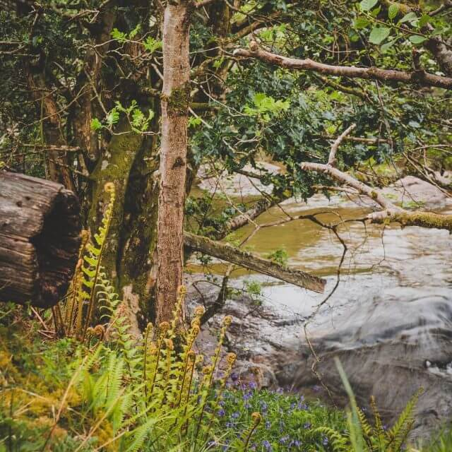 Naturelove in Scotland  scotland kiratonscotland kiratontravel Continue Reading 18645689132014467810616812739092043268096n