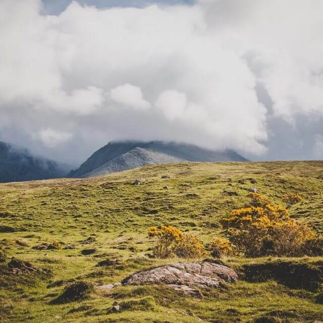 Cloudy sky with sunny gorse    wildernesslifestyle roadtriphellip
